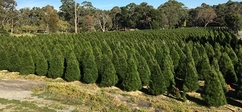 Montrose Christmas Tree Farm