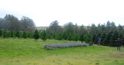 Little Hills Christmas Tree Farm
