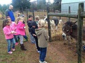 the Atlanta Area of Georgia Christmas Tree Farms: choose-and-cut ...