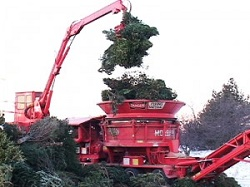 Grinding Christmas trees into mulch