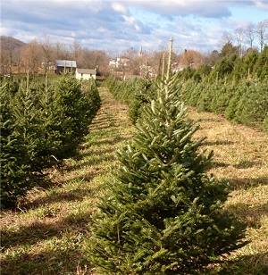 Reinhart's Christmas Tree Farm